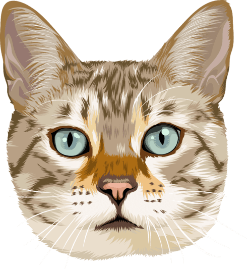 cartoon of cat with blue eyes