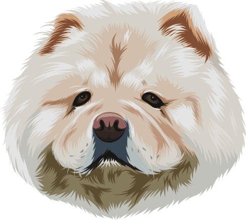 sample cartoon of chow chow