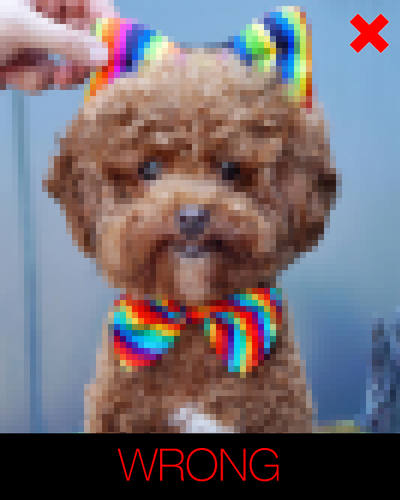 cartoon dog photo instructions - blurred