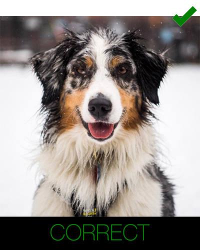 cartoon dog photo instructions - complete